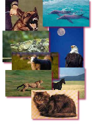 Montage of Animals